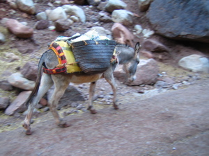 Donkey (transport)