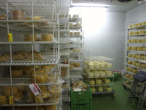 cheese-making in navarra